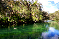 DeLeon Springs and Blue Spring - Nov 2011