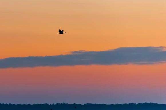 Lone Sandhill Crane at Dusk on the Prairie